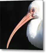 White Ibis Profile Metal Print