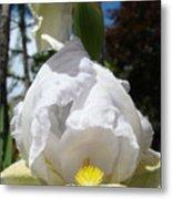 White Iris Flower Art Prints Canvas Irises Artwork Metal Print