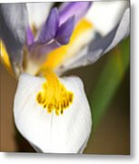 White Iris One Metal Print