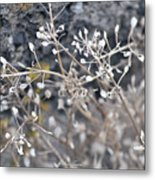 White Irish Flower Metal Print