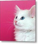 White Kitten On Pink Metal Print