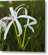White Lilies In Bloom Metal Print