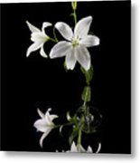 White Lilly With Reflection And Water Drop Metal Print