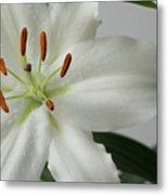 White Lily 1 Metal Print