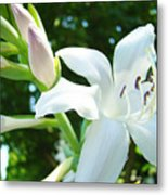 White Lily Flowers Art Prints Lilies Giclee Baslee Troutman Metal Print