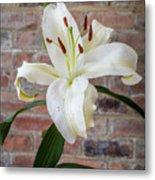 White Lily Portrait Metal Print