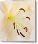 White Lily Square Version Metal Print