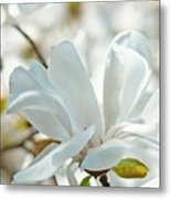 White Magnolia Tree Flower Art Prints Magnolias Baslee Troutman Metal Print