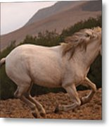 White Mare Gallops #1 -  Close Up Brighter Metal Print