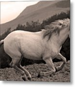 White Mare Gallops #1 -  Close Up Sepia Metal Print