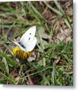 White Moth Metal Print