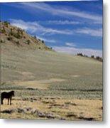 White Mountain Horse Metal Print