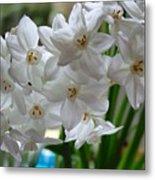 White Narcissi Spring Flower 2 Metal Print
