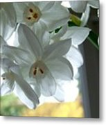 White Narcissi Spring Flower Metal Print