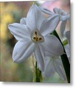 White Narcissi Spring Flowers 3 Metal Print