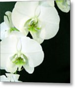 White Orchid Elegance Metal Print