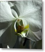 White Orchid In Spring Metal Print