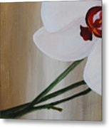 White Orchid Light Background First Section Metal Print