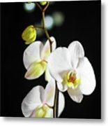 White Orchid On Black Bw Metal Print