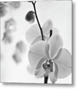 White Orchid On White Bw Metal Print