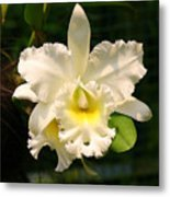 White Orchid Singapore Metal Print