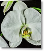 White Orchid On Black Metal Print