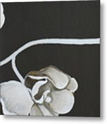 White Orchid Third Section Metal Print