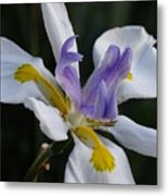 White Orchid With Yellow And Purple Metal Print
