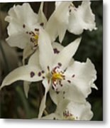 White Orchids 2 Metal Print