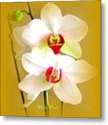 White Orchids Metal Print by Doris Wood