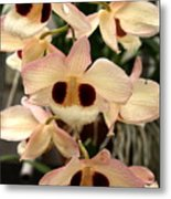 White Orchids With A Hint Of Pink Metal Print