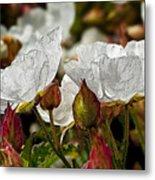 White Paper Petals Metal Print