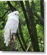 White Parrot Metal Print