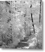 White Path Metal Print
