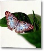 White Peacock Butterfly 2 Metal Print