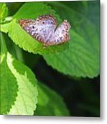 White Peacock Butterfly II Metal Print