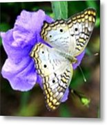 White Peacock Butterfly On Purple 2 Metal Print