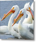 White Pelicans At Nelson Lake Metal Print