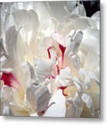 White Peony And Red Highlights Metal Print