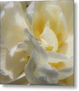 White Peony Tulip Detail Metal Print