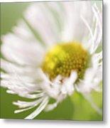 White Petal Flower Abstract Metal Print
