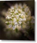 White Plum Blossom- 2 Metal Print