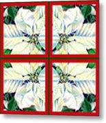White Poinsettia Quartet Metal Print