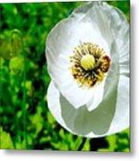 White Poppy Metal Print