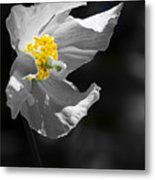 White Poppy Metal Print