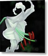 White, Red And Green Lily Metal Print