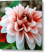 White Red Flower Metal Print by Jame Hayes
