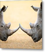 White Rhinoceros  Head To Head Metal Print