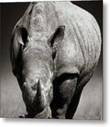 White Rhinoceros  In Due-tone Metal Print