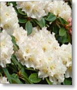 White Rhodies Landscape Floral Art Prints Canvas Baslee Troutman Metal Print
